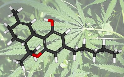 Medicinal Marijuana: Going Beyond CBD and THC